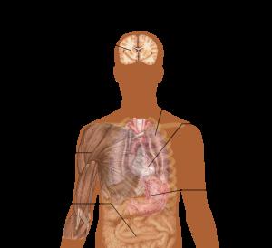 654px-Symptoms_of_acidosis_svg