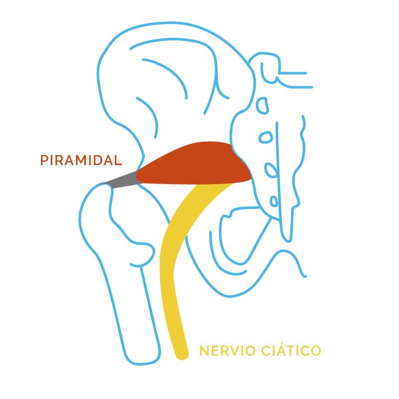 Piramidal y Nervio Ciático
